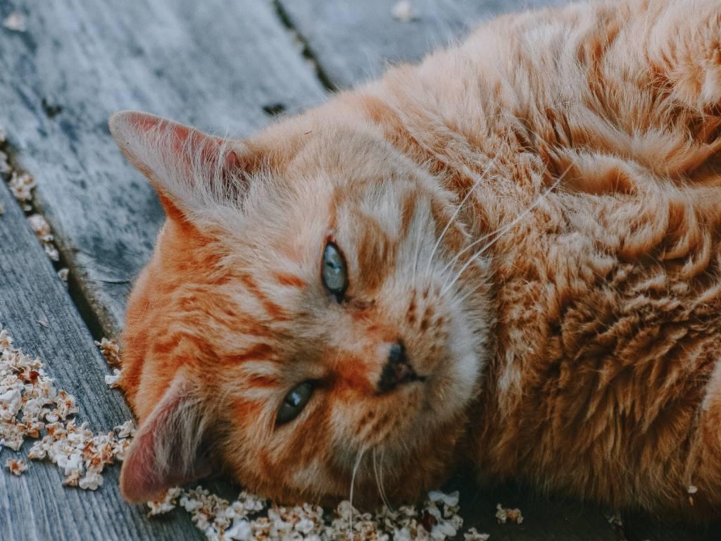 veterinarios gatos