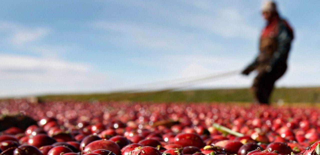 importaciones agricolas |Business Insider México