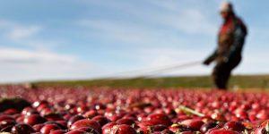 Gobierno de EU iniciará investigaciones sobre las importaciones agrícolas de México; Secretaría de Economía pide que se apeguen a reglas de TMEC
