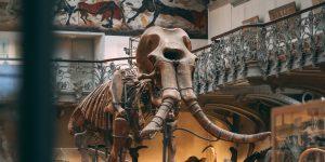 La zona del aeropuerto de Santa Lucía podría ser uno de los cementerios de mamuts más grande del planeta