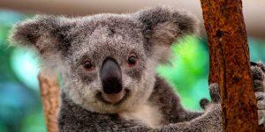 Un informe de WWF revela el catastrófico declive de la fauna mundial —América Latina es donde más especies se han extinguido