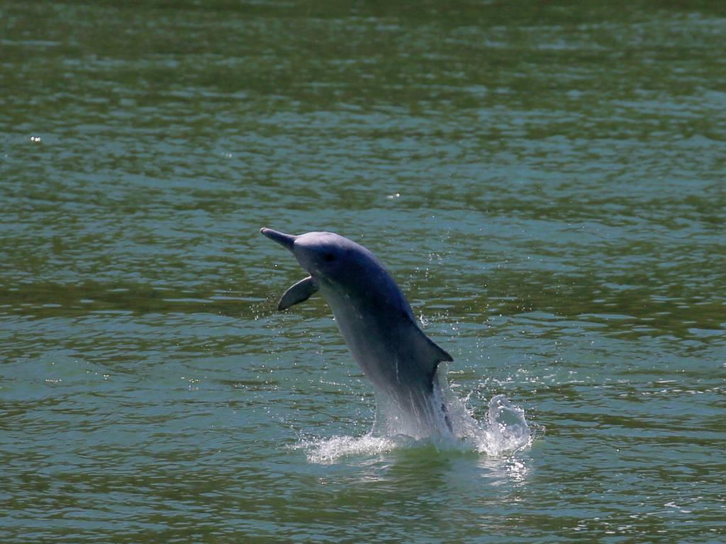 delfines jorobados