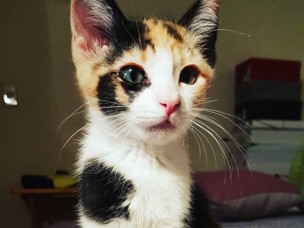 esterilizar al gato