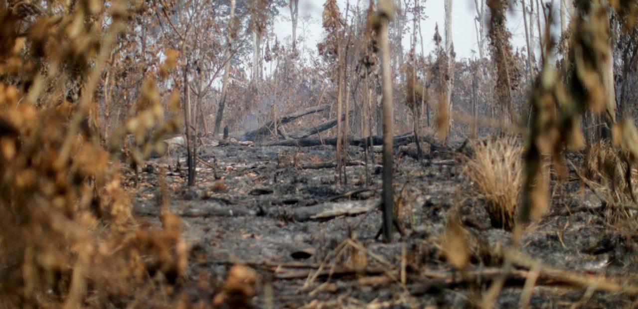 destrucción naturaleza | Business Insider México