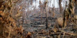 La humanidad no cumplió ni un objetivo para detener la destrucción de la naturaleza, advierte la ONU