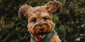 Te explicamos 12 de los comportamientos más extraños de los perros