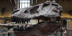 Uno de los esqueletos de Tiranosaurio Rex más completos del mundo se subastará por entre 6 y 8 millones de dólares
