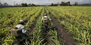 La industria azucarera tendrá un amargo 2021 por menores exportaciones y posibles nuevos impuestos