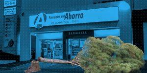 Farmacias del Ahorro irá a juicio en un caso de tala ilegal de árboles— esto es lo que debes saber del caso