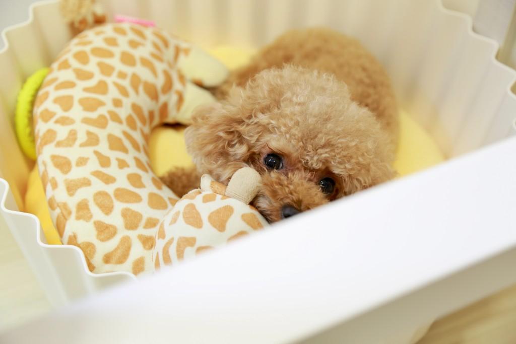 vendedores marco antonio regil poodle | Business Insider México