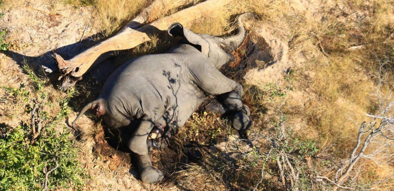 elefantes Botswana