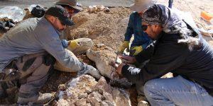 Científicos descubren restos de un gran depredador marino jurásico en el Desierto de Atacama