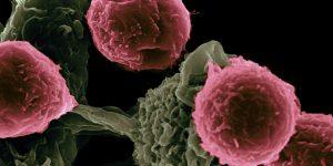 Científicos identifican una nanopartícula que hace que las células cancerígenas se autodestruyan: así es como este «caballo de Troya» podría combatir el cáncer