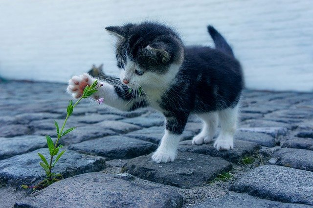 Cosas que debes saber si piensas adoptar gatos | business insider mexico