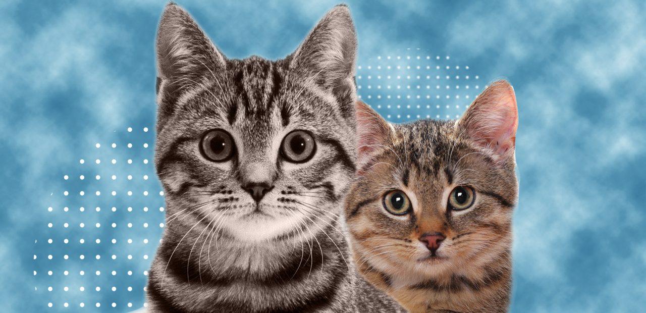 Adoptar gatos | Business Insider México