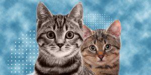 5 cosas que debes conocer de los gatos si piensas adoptar a uno