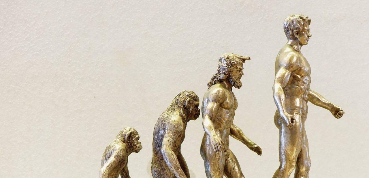 humanos microevoluciones