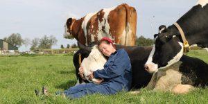 Abrazar vacas se ha convertido en la última tendencia mundial de bienestar para ayudar a reducir el estrés y aumentar la positividad