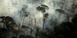 El 40% de la selva amazónica podría convertirse en una sabana al final del siglo, según estudio