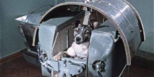 La perrita Laika y otros animales que fueron enviados al espacio