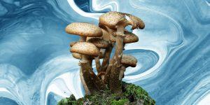 """Los hongos """"mágicos"""" podrían tratar la depresión a largo plazo 4 veces mejor que los antidepresivos, encuentra un estudio"""