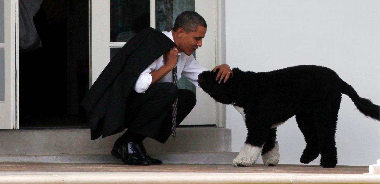 mascotas Casa Blanca | Business Insider México