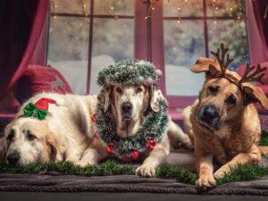 Las mascotas impulsarán las ventas en la industria del cuidado de animales de compañía durante la época navideña