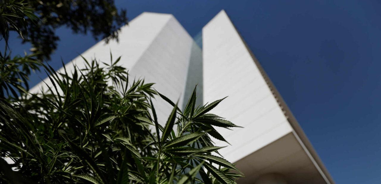 legalización mariguana | Business Insider Mexico