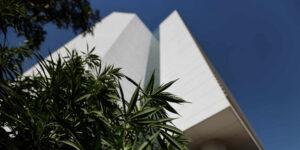El Senado aprueba iniciativa por la legalización de la marihuana en «día histórico»