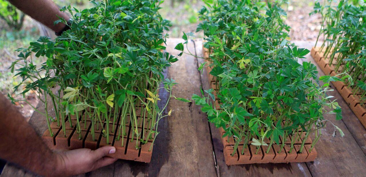 exportación de marihuana medicinal | Business Insider Mexico