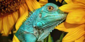 15 fotos que muestran la belleza de los animales de todo el mundo