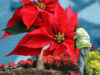 Nochebuenas |Business Insider México