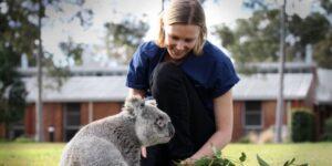 Un hospital móvil para animales salvajes que están heridos recorre las calles de Australia