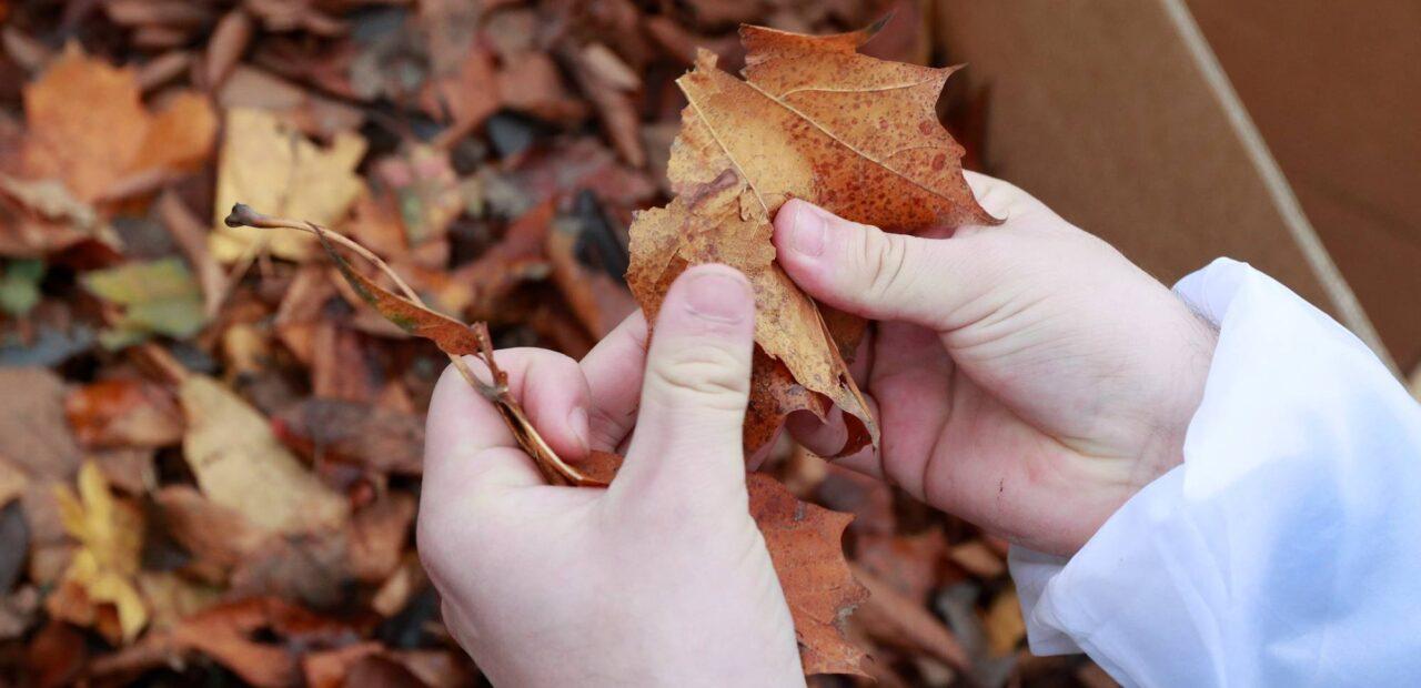 hojas caídas de árboles