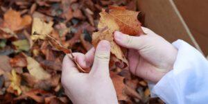 Esta iniciativa creada por un joven de 19 años busca convertir hojas caídas de árboles en papel para reducir la tala