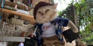 Este hombre de Indonesia encontró un negocio lucrativo en la moda para gatos