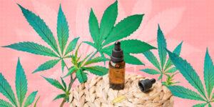 ¿Qué es el CBD, el THC y el CBG? Apréndelo con esta guía rápida sobre los efectos de los diferentes tipos de cannabis en tu cuerpo