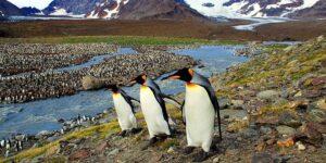 El iceberg más grande del mundo perdió un fragmento cerca de una colonia de pingüinos en las islas Georgias del Sur