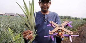 Un equipo de científicos de Malasia utiliza hojas de piña para fabricar drones