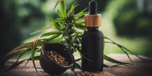 México ya tiene reglamento para la producción y uso medicinal de cannabis —abre la puerta a las actividades productivas