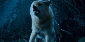 La ciencia nos acerca a 'Game of Thrones': un grupo de científicos logró secuenciar el ADN del lobo huargo