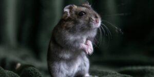Científicos alemanes logran que ratones con parálisis vuelvan a caminar gracias un método que estimula sus células nerviosas