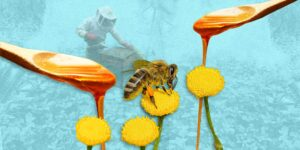 Las abejas son las mejores amigas de la humanidad —y claro que estás listo para esta conversación