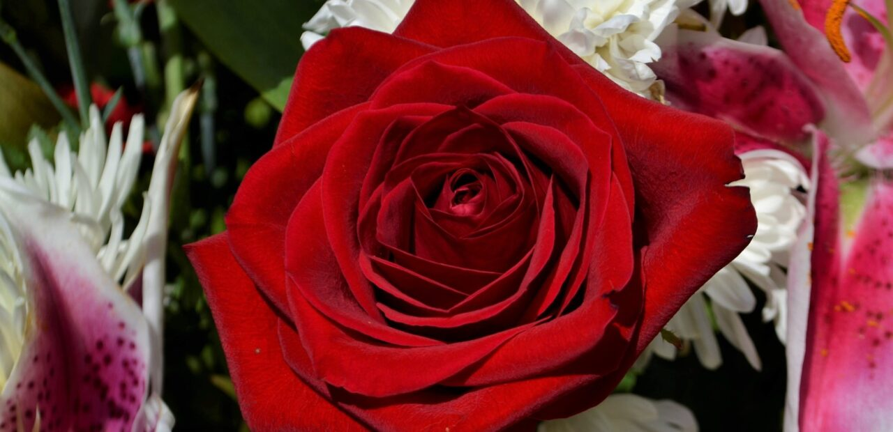 Día de San Valentín   Business Insider Mexico