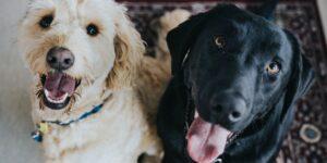 Los veterinarios revelan 10 de los errores más comunes que cometen los dueños de mascotas