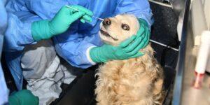 Corea del Sur inicia pruebas de Covid-19 en mascotas