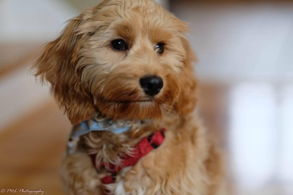 como cuidar a tu perro