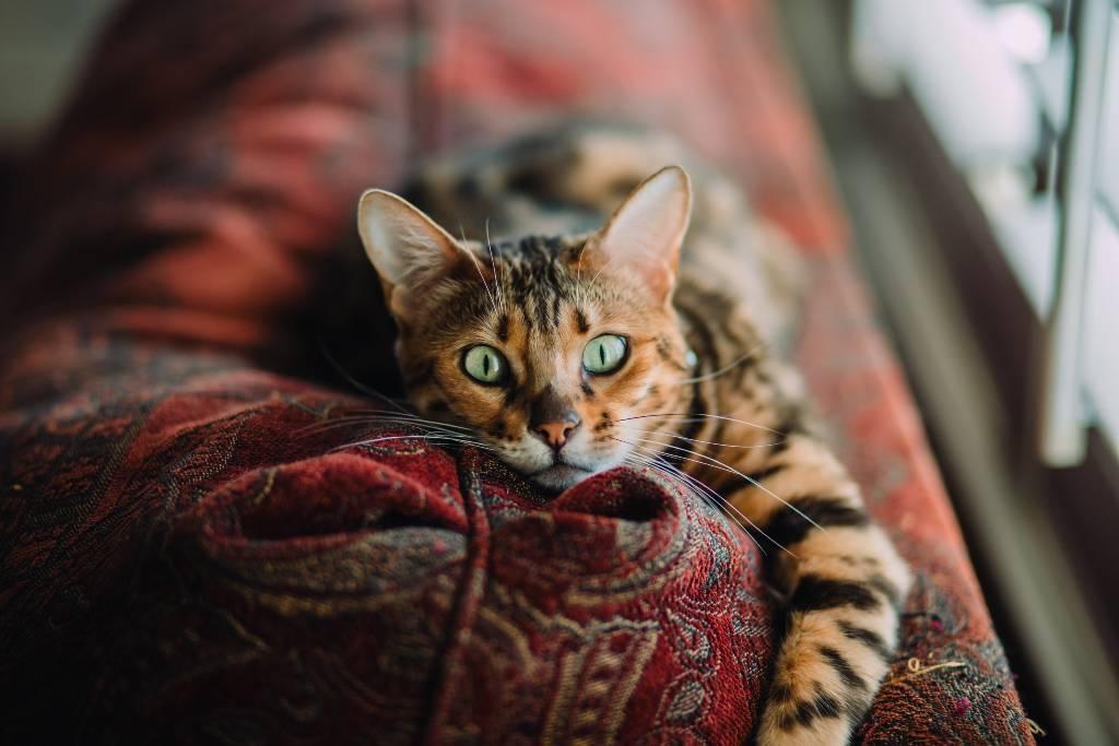 areneros para gato | Business Insider Mexico