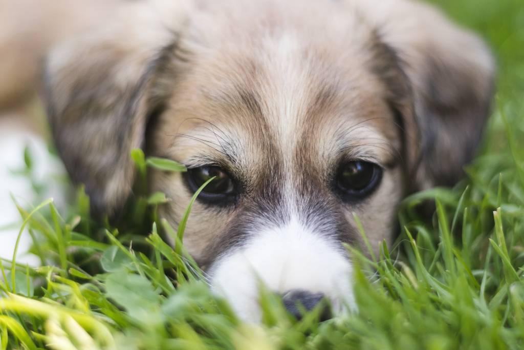 vomito perros | Business Insider Mexico