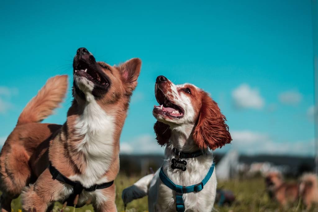 perros | Business Insider Mexico